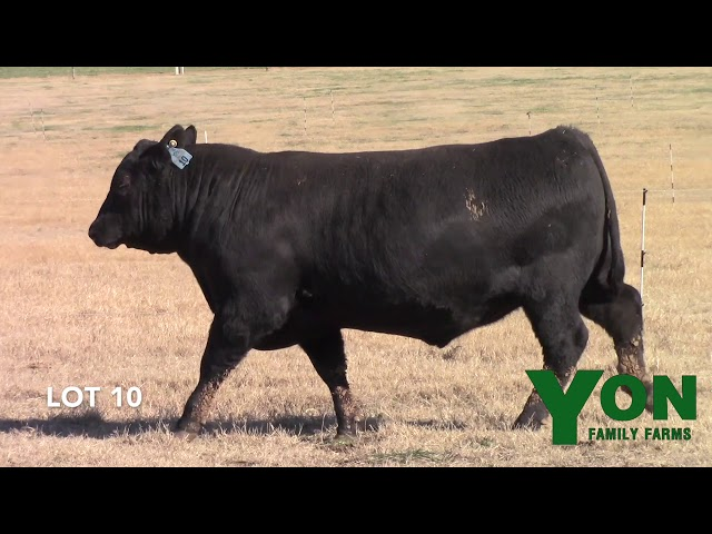 Yon Family Farms Lot 10