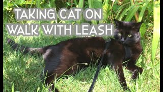 Taking my BLACK CAT on WALK with Leash   Fail   Training Cat to Walk