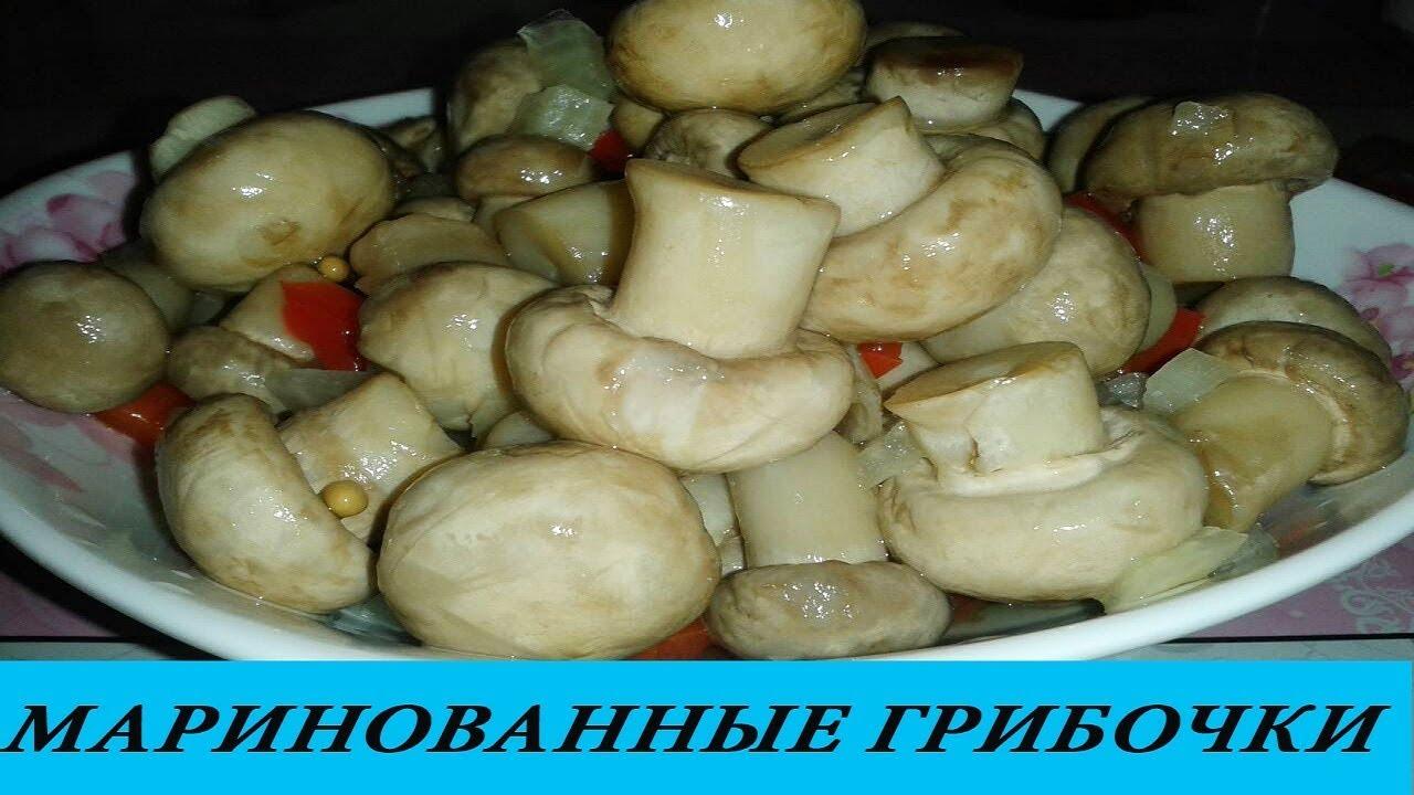 Продажа мицелии грибов по низким ценам ▻▻▻ интернет-магазин агролиния. Доставка ✈ по всей украине, опт и розница.