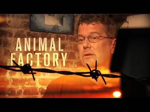 David Kirby on Animal Factories