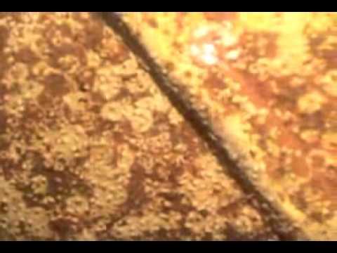 SKY STAR   UNDERWATER SURVEY RECORD VCD 2