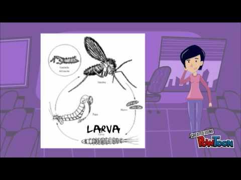 video de parasitología: leishmaniasis