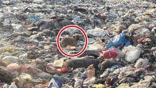 ゴミの山で暮らす犬、それを見た男性は助けなけらばと思い... トルコの...