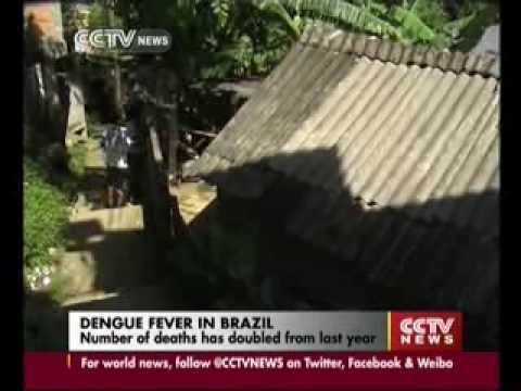 Dengue fever killed 570 people in Brazil in 2013, double the number from last year
