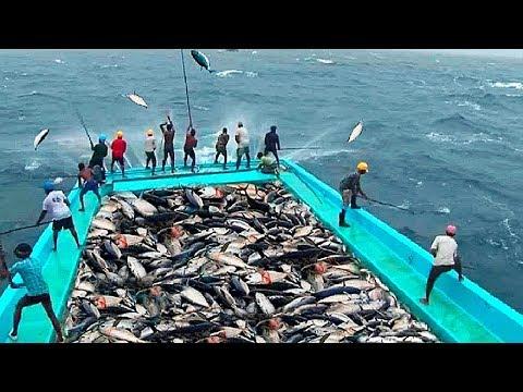10 Самых Больших Уловов Рыбы в Мире