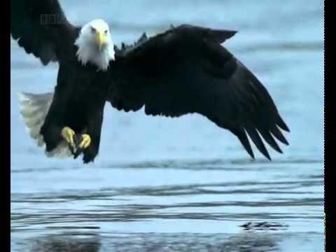 Mensagem Motivacional é Imperdível águia Aguia