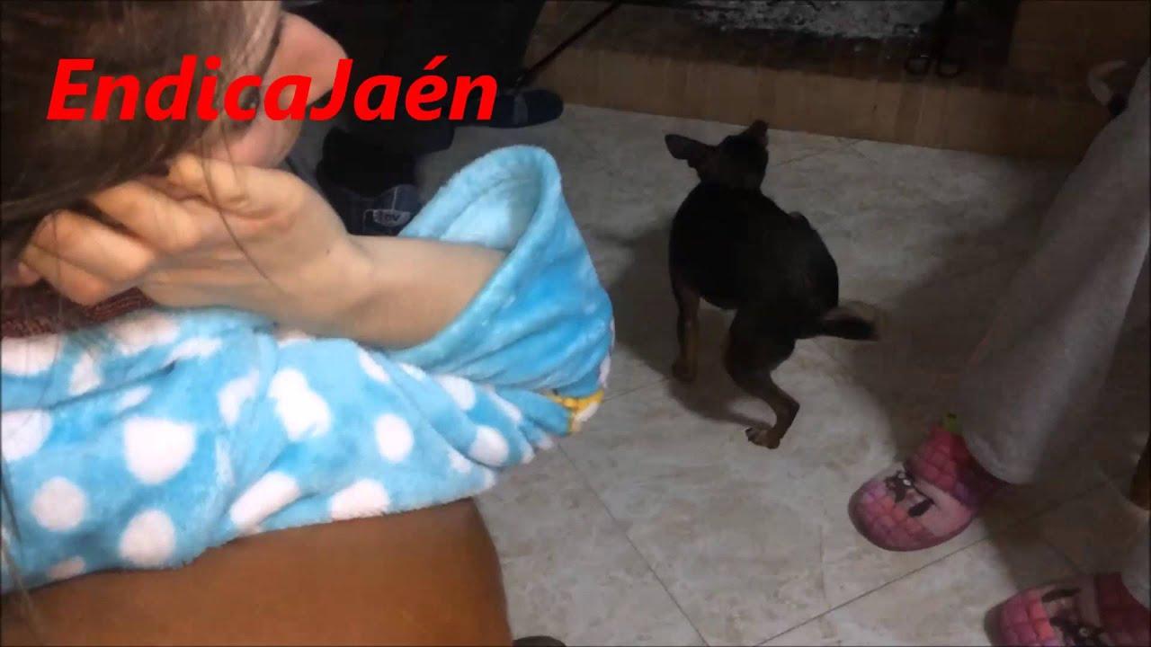 Cagadas Y Peos Videos Porno peo perro , perrita se tira un pedo mientras se rasca.