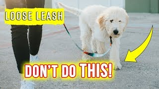 What NOT to do when Leash Training your Puppy!! �  Goldendoodle Puppy Tips