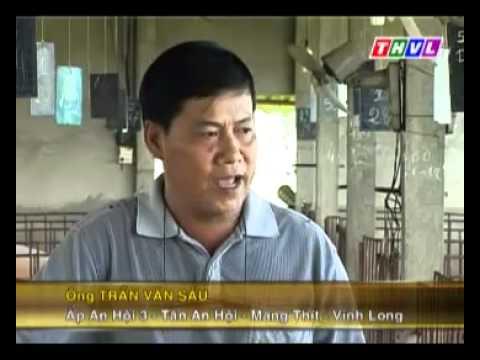 Nhanonglamgiau.com - Mô hình nuôi heo đực giống ở Vĩnh Long