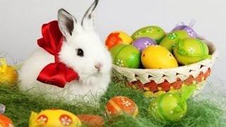Поздравление с Пасхой. Красивое музыкальное видеопоздравление с праздником Святой Пасхи
