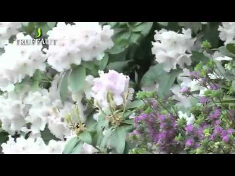 comment planter un rhododendron jardinerie truffaut tv youtube. Black Bedroom Furniture Sets. Home Design Ideas