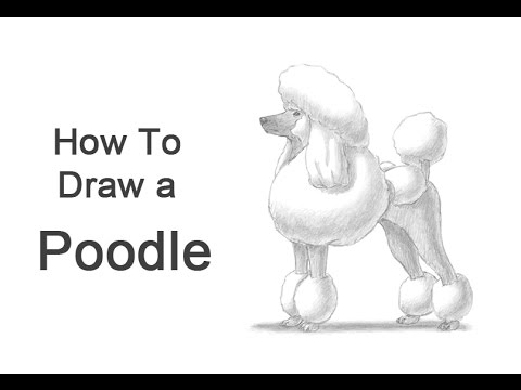 How To Draw A Dog Poodle You