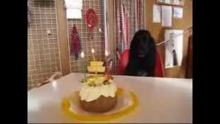 看板犬・ボーダーコリーの ハリーくん12歳、イングリッシュコッカースパ...