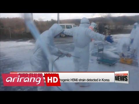 Japan says bird flu is same H5N6 strain detected in Korea