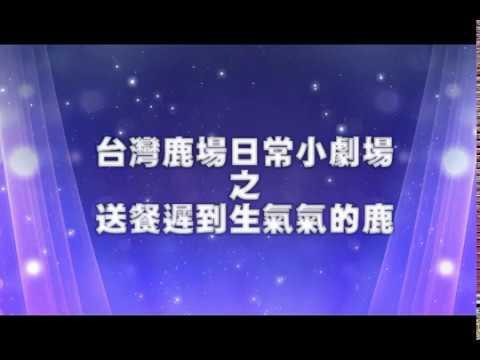 台灣鹿日常小劇場-生氣的鹿