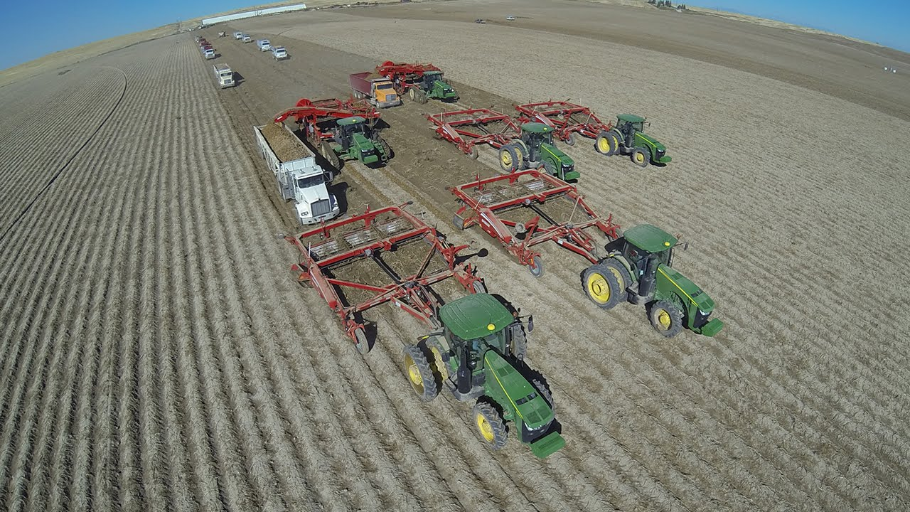 Image result for 16 Row massive potato harvest in Idaho