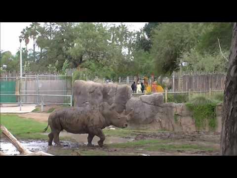 zoo di Tucson