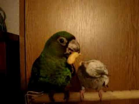 Kira and Mako eat a nutlet. (Кира и Мако кушают орешек)
