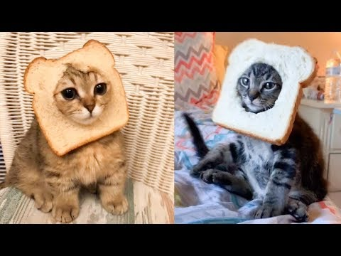 Cat Reaction to Cat Bread - Funny Cat Bread Reaction Compilation