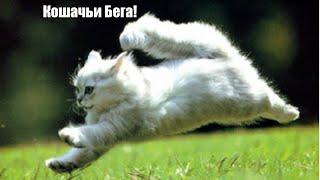 Обзор игры Team Drift Cats (Кошачьи Бега!)