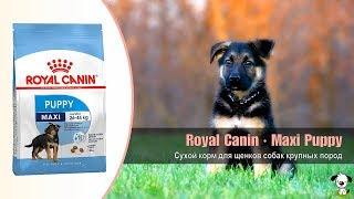 Сухой корм для щенков собак крупных пород от 2 до 15 месяцев · Royal Canin Maxi Puppy