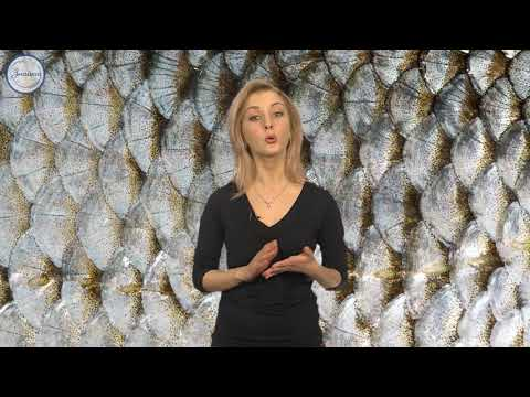Биология 7 класс.  Рыбы.  Общая характеристика и внешнее строение
