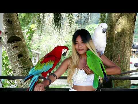 samui-thailand-|-tempat-wisata-terbaik,-tempat-untuk-dikunjungi,-hal-hal-yang-harus-dilakukan
