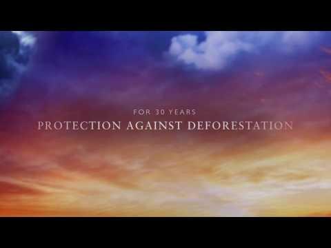 Rainforest Action Network for Mr. Turkal