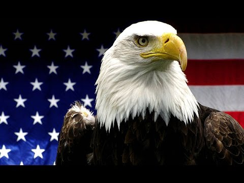 Bald Eagle - The National Bird