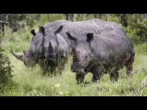 Rainy Season in Kruger N.P. / South Africa