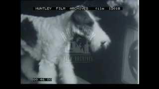 Dog Show In The 1940's In The U.k.  Film 15018