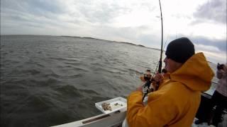 Matt landing a Striped Bass