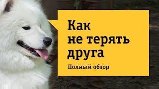 Умный GPS ошейник Mishiko  - Обзор. Пропала собака? Найдена собака!