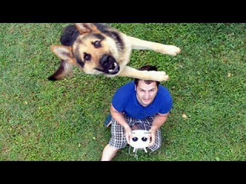Funny German Shepherd Doesn't Allow Drone To Land