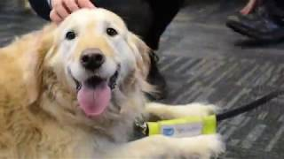 Guide Dogs relax Staffordshire University Students at Dog De-Stress Day