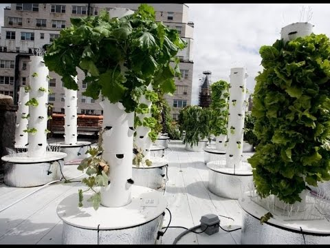 Modern Hydroponic Systems for the Home and Garden on greenhouse home design, construction home design, compact home design, permaculture home design, aquaponic home design, lighting home design, aquarium home design, garden home design, outdoor home design, art home design, clean home design, organic home design, design home design, copper home design, farm home design, punk rock home design, irrigation home design, indoor home design, medical home design, down home design,