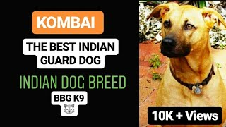 KOMBAI dog breed(facts) | BBG K9 |