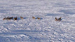 Волосы встали дыбом когда запустили квадрокоптер  Закрылись по зайчику в Сибири.