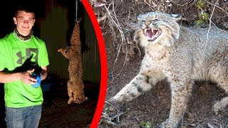 Bobcat Catch & Cook! (Full Usage)
