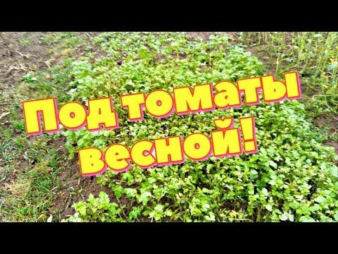 Вопрос: Какие седераты можно посеять перед томатами весной?