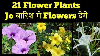 21 Flower Plants जो बारिश मे देगे ढेरों Flowers
