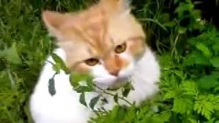 Кот под Валерьянкой.mp4