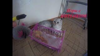 😻КОТЕНОК ХЛОЯ 🐱 Смешное Видео про Котенка 🐱Игрушки для котят 🐱 Игры с котом