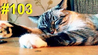 Длина кота в шкафах
