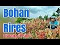 Bohan Rires - Harto Tarigan | Karaoke