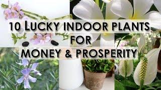 10 Lucky Indoor Plants For Money & Prosperity
