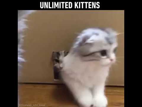 Unlimited Kittens from one box ❤ Oh my heart! is this heaven? 😻