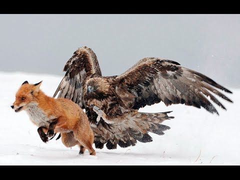 10 Fun Facts About Eagles