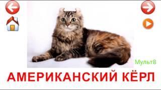 Учебные Карточки для детей #Домана Породы Кошек на канале #Мульт8