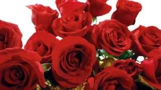 ENYA -  China Roses   HD